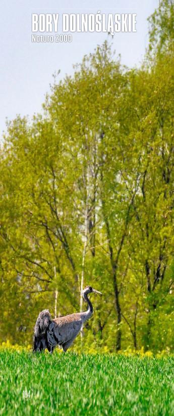 Samiec żurawia zwyczajnego